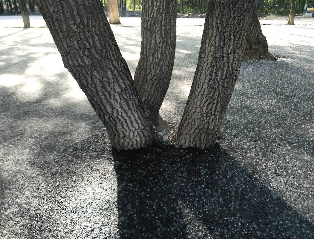 В Полтаве ремонтники закатали деревья в асфальт