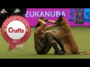 Amazing Dog Performs CPR Squats and Press Ups in Heelwork To Music Routine Crufts 2017