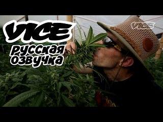 Короли каннабиса, люди изменившие индустрию марихуаны (VICE Русская Озвучка)