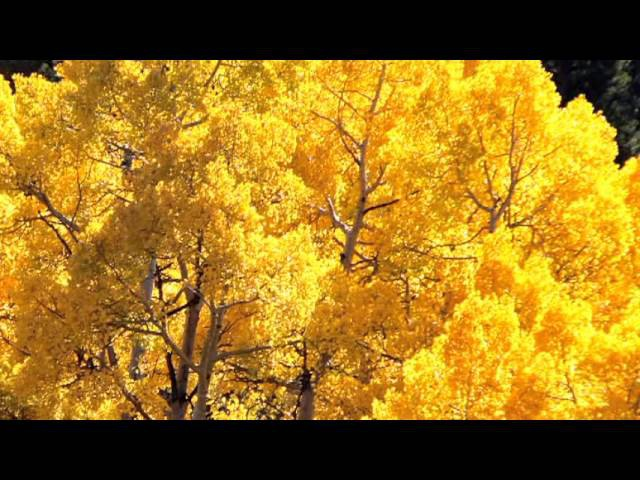 Жан Татлян Осенний свет. Jan Tatlyan. Autumn Light Colorado Fall by A. Lerner