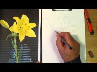 Как рисовать лилию. Часть 1. Урок 28. How to draw a lily. Lesson 28