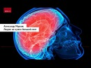 Александр Марков Людям не нужен большой мозг