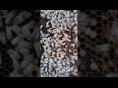 Пчелопакеты из Узбекистана не покупайте целая фура кидалова