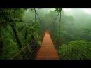 Дикая природа Джунгли тропический лес Центральная Америка Документальный ф