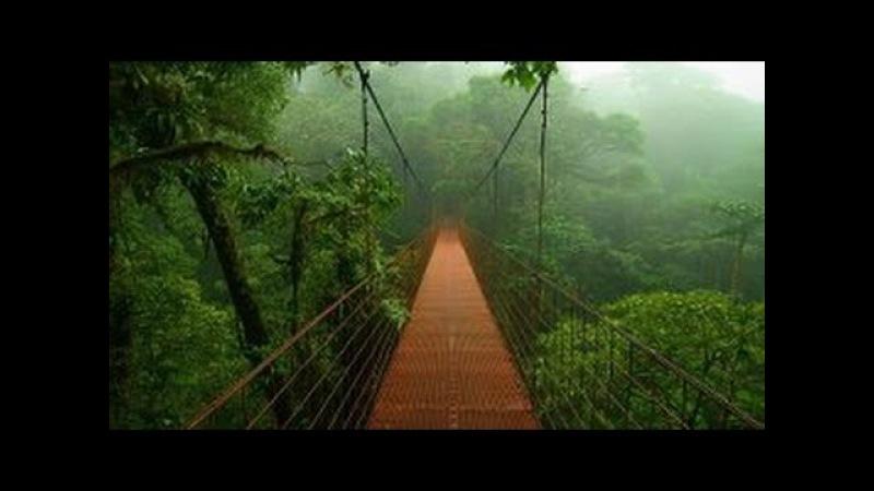 Дикая природа. Джунгли - тропический лес. Центральная Америка. Документальный ф ...