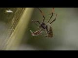 Удивительные пауки.Udivitelnye pauki 2015 HDTVRip