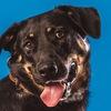 Приют для собак САО г. Москвы в Куркино Химки-2