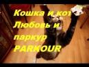 Кошка паркур и любовь PARKOUR LOVE CAT