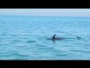 Дельфины в Железном Порту
