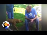 Dog Doesn't Recognize Owner After Weight Loss...Until He Sniffs The Dodo