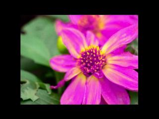 METI$ - Мертвые цветы (Flowers ep)