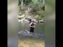 Любимчик рыб