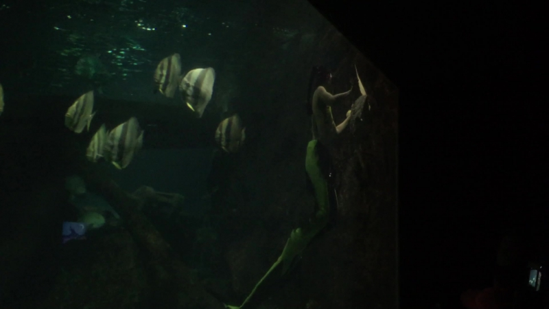 Шоу русалок в океанариуме Адлера