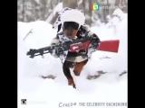 Собака Диверсант
