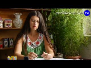 Как живёт Франция 5 (Познавательное ТВ, Елена Рычкова)