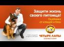 Советы ведущего ветеринара «Четыре Лапы». Ошейники от блох и клещей.