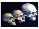 Эволюция человека. История происхождения человечества. ' xtkjdtrf. bcnjhbz ghjbc[j;ltybz xtkjdtxtcndf.