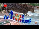 A CAT IS FISHING ★ 猫は釣りです★ Приколы с котами - НА РЫБАЛКЕ! РЖАЧ! SV Life