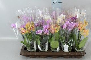 Свежесрезанные цветы оптом донецке, доставка цветов витебск оплата по карте