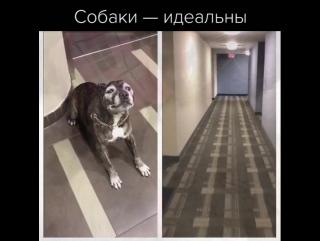 Собаки — идеальны