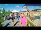 Зоопарк 12 месяцев
