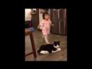 1477988838_cat-thug-life