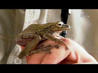 Test-IPTV-vlc-record-2017-01-12-02h57m06s-Animal Planet HD