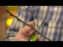 Зимняя заготовка черенков плодовых деревьев для весенней прививки