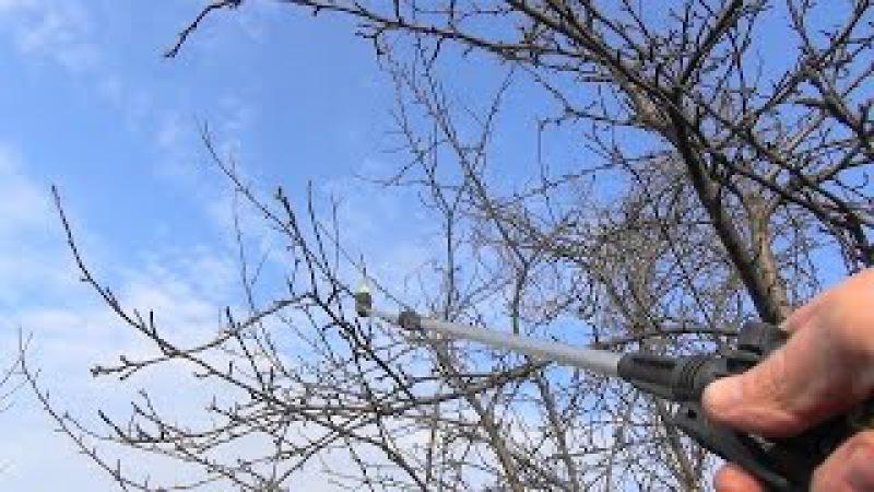 Опрыскивание деревьев и кустарников мочевиной (карбамидом).