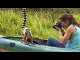 Madagascar - Lemur Island