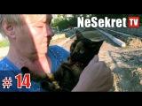 Спасение #14. ПРОДОЛЖЕНИЕ истории о кошке пробывшей на дереве три дня.  Город Улан-...