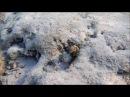 рыбы красное море, Мурена снежная, Echidna nebulosa