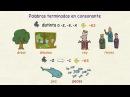 Aprender español: Plurales (nivel básico)