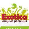 Хищные растения |Венерина мухоловка |EXOTICA|