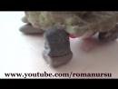 Как сделать мини фонтан ручей своими руками How to make a mini fountain stre