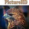 Классные картинки и обои - PictureHD