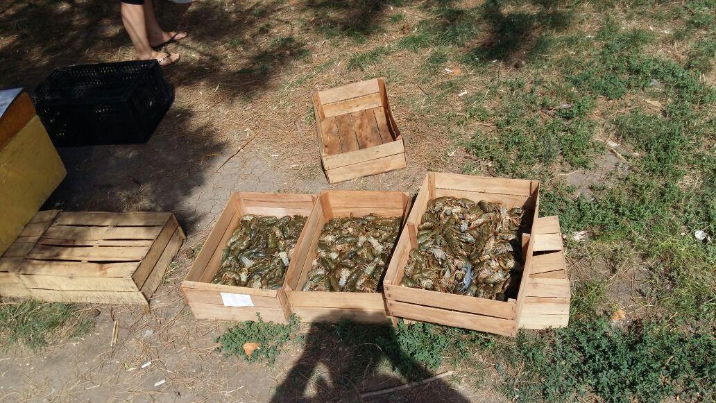 В Ростове-на-Дону уничтожено более 100 кг раков неизвестного происхождения