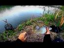 Вечерняя рыбалка. Бешеный клев в метре от берега. Крупный карась, подлещик, густе...