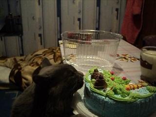 Серик и тортик