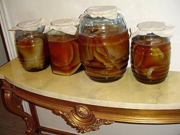 Чайный гриб — антибиотик из банки