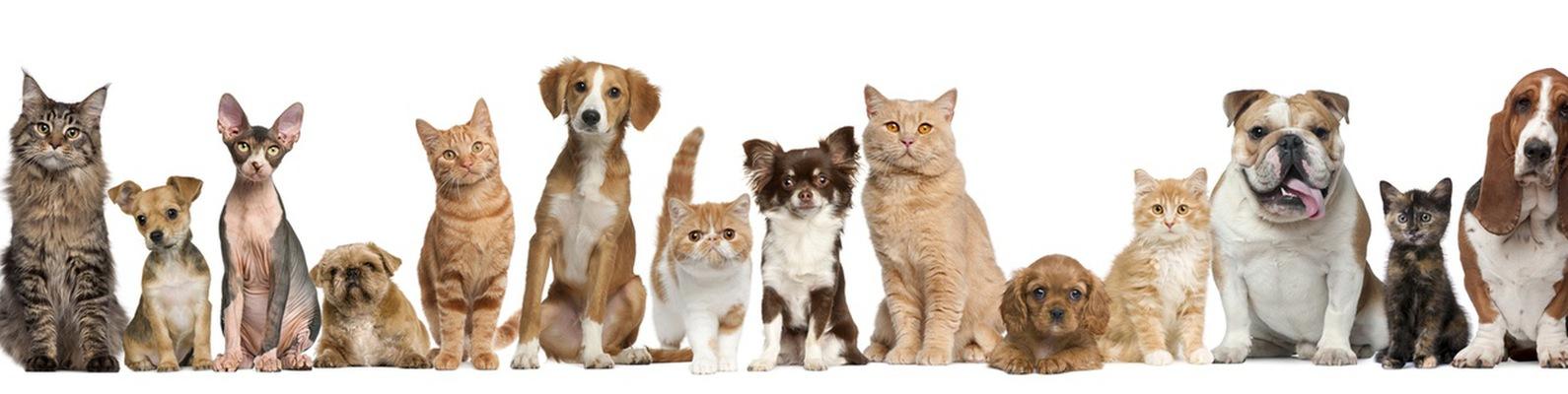 колыбельная для кошек слушать онлайн