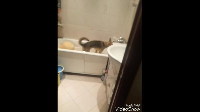 Собака которая очень любит мыть лапы смотреть онлайн без регистрации