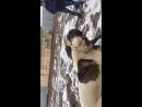 Собачий бой