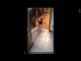 собака очень смешно учит ребенка прыгать [nastroenie zbs]