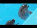 Одинокий Дельфин. Правда о дельфинариях