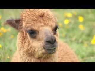 ПРИСУТСТВИЕ: Долина инков (Перу)