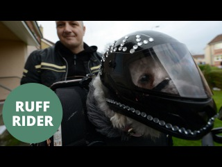 Adorable rescue dog goes on motorbike rides dressed in full leather