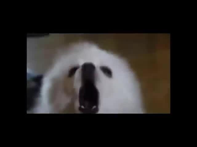 Gabe the Dog - Remix Compilation 2