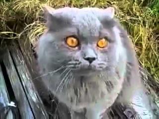 Кот говорит гад