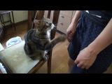 Котя хочет ласки .